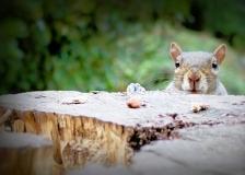 Cheeky Squirrel, St Alfege Park, Greenwich, London