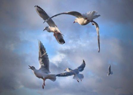 A Circle Of Gulls, Thames Path, Greenwich, London