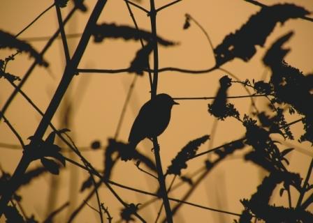 Bird Silhouette Part I, St Alfege Park, Greenwich, London
