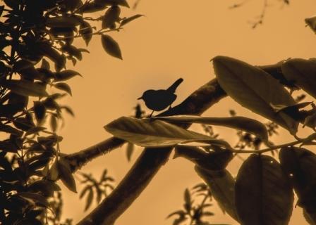 Bird Silhouette Part II, St Alfege Park Greenwich, London