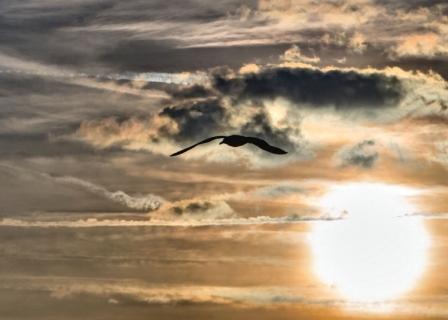 Seagull Sunset, Thames Path, Greenwich, London