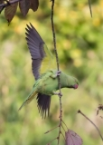 The Performing Parakeet, Greenwich Park, London