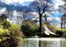 The Start Of Spring, Flower Garden, Greenwich Park, London