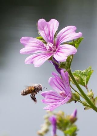 The Pollinator, Kingston Upon Thames Riverside, Surrey