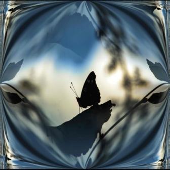 Butterfly Silhouette, St Alfege Park, Greenwich, London