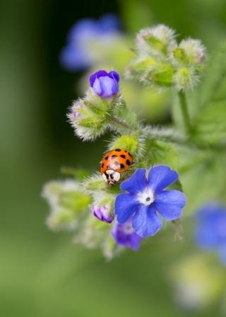 Ladybird Dream