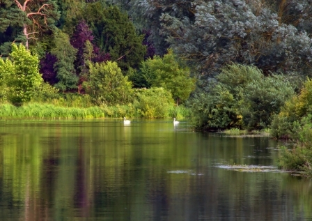 Swan Lake, Coltishall Village, Norfolk