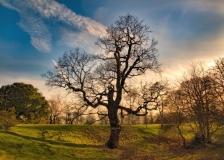 Tree & Sky, Greenwich Park, London